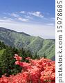 Katsuragiyama杜鵑花 15978685