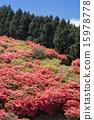 映山紅 15978778