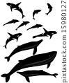 鲸鱼 逆戟鲸 矢量 15980127