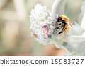 Bee while sucking pollen from flower 15983727