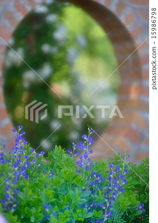 Brick arch and blue flower 15986798