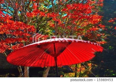 단풍 우산했다 줘 15989453