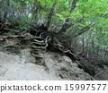 树 树木 树栖 15997577
