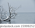 lake, shore, the 15999252