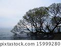 Lakeshore 15999280