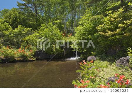 Fresh green Yachiho Plateau 16002085
