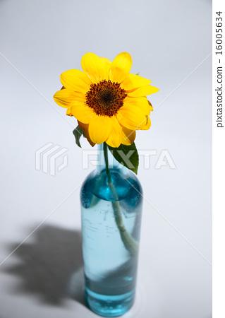 Vase For One Flower Flower Sunflower Stock Photo 16005634 Pixta