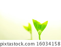 bud, edamame, sprouts 16034158
