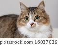 고양이 나짱 16037039
