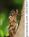 蟲子 蟬 蝗蟲 16039647
