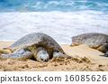 海龜 海岸 海濱 16085626
