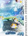 鱼 珊瑚 珊瑚礁 16088665