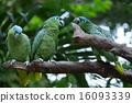 野生生物 鹦鹉 自然 16093339