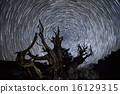Star Trails over Ancient Bristlecone Pine Tree 16129315