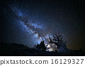 Galactic Core above Ancient Bristlecone Pine Trees 16129327