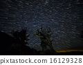 Star Trails over Oldest Living Trees on Earth 16129328