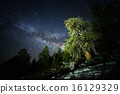 Milky Way Galaxy over Ancient Forest 16129329