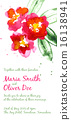 Vector background with red watercolor camellias 16138941