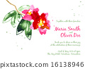 Vector background with red watercolor camellias 16138946