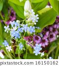 แปลงดอกไม้,ดอกไม้,ฤดูร้อน 16150162