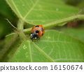 Ladybug 16150674
