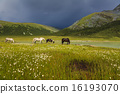 Mountain landscape with grazing horses 16193070