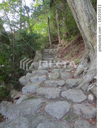 outdoorsy, yellow-green, stone pavement 16203011