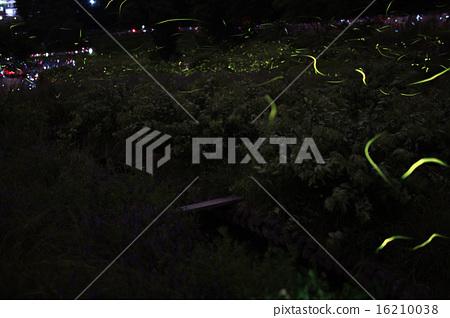 Firefly of Tatsuno 16210038