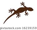 壁虎 爬蟲類的 爬行動物 16239159