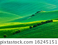 Moravian rolling landscape with hunting tower shack 16245151