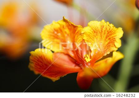 花卉 16248232