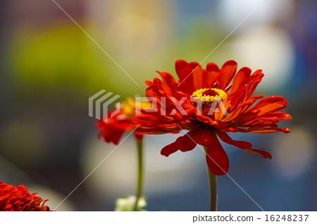 花卉 16248237