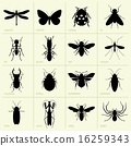 Insects 16259343