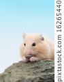 倉鼠 狗 藍色背景 16265440