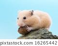 햄스터, 껍질, 껍데기 16265442