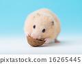 倉鼠 品嚐 吃 16265445