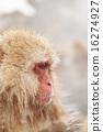 猴年 丙申年 申年 16274927