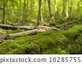 fallen, tree, timber 16285755