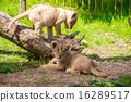 fuji safari park, baby, king of beasts 16289517