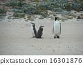 企鵝 國王 鳥兒 16301876