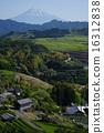 fuji, sacred mountain, world heritage 16312838