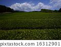 shizuoka prefecture, green, verdure 16312901
