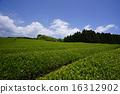 shizuoka prefecture, green, verdure 16312902