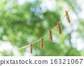 laundry, clothes peg, clothes-peg 16321067