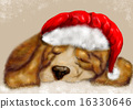 beagle sleeping 16330646
