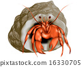 hermit crab isolated 16330705