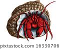 hermit crab 16330706