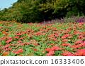 溫暖的顏色花園 16333406