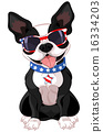 4th of July Boston Terrier 16334203