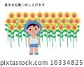 夏季贺卡 明信片 向日葵 16334825